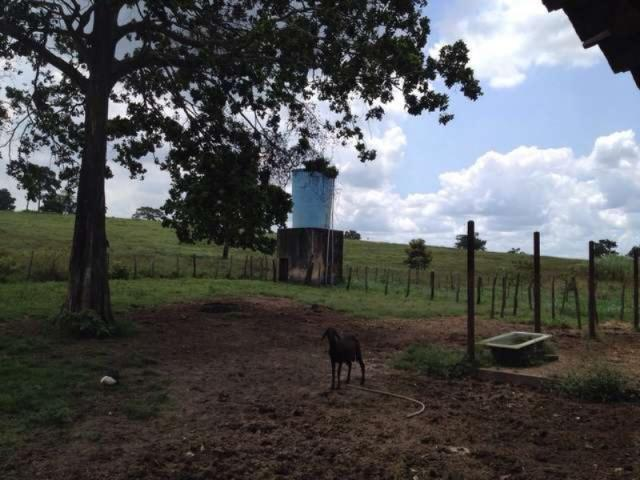 Oportunidade fazenda 116 tarefas - Foto 20