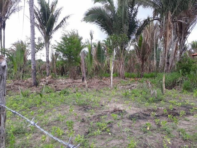 Terreno 200 hec. 30km do P Fiscal de Timon - Foto 2