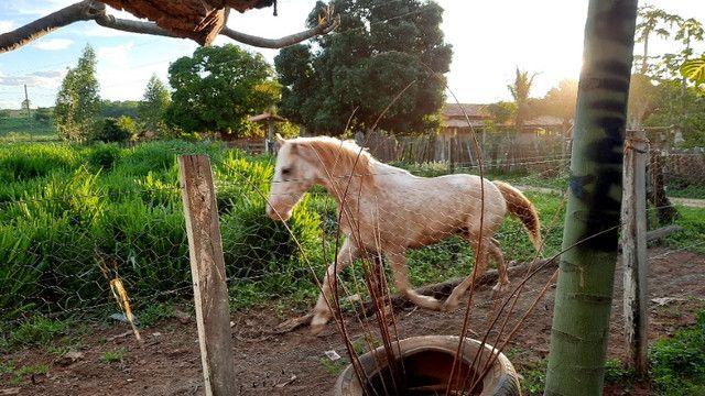 Cavalo apaluza valor 1.500 - Foto 3