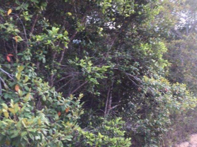 Terreno à venda em Trancoso, Porto seguro cod:J49351 - Foto 2