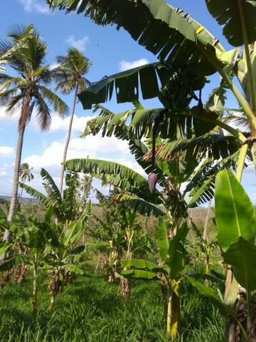 Sitio formado com toda infraestrutura, Zona Rural 65km de Recife - Foto 18
