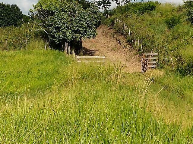 9 hectares nas Margens da BR 232 a 25 km de Recife PE - Foto 17
