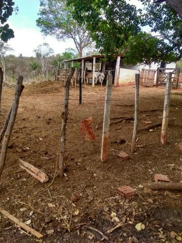 Sitio formado com toda infraestrutura, Zona Rural 65km de Recife - Foto 17