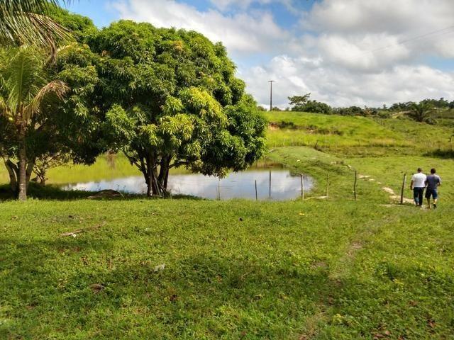 9 hectares nas Margens da BR 232 a 25 km de Recife PE - Foto 11