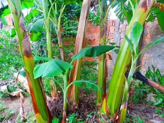 Bananeiras - Foto 2