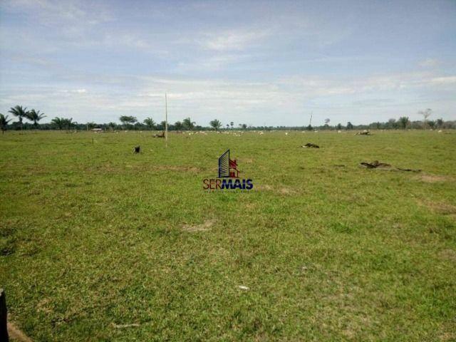 Fazenda à venda, por R$ 3.888.000 - Zona Rural - São Francisco do Guaporé/RO - Foto 2
