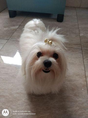 Hospedagem para cachorro - Foto 2
