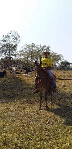Vendo burro  - Foto 2