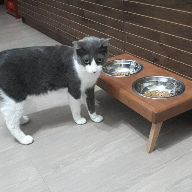Comedouro em madeira para cães e gatos! - Foto 3