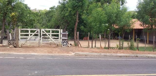 Vendo Sitio no Povoado Felicidade Municipio de Jose de Freitas - Foto 6