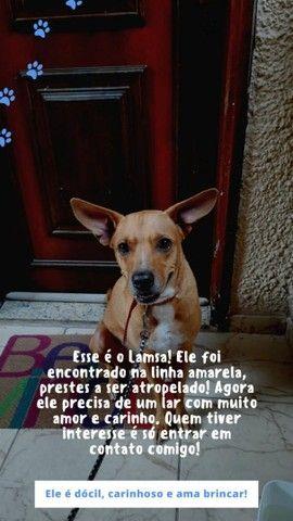 ADOÇÃO CACHORRINHO *** URGENTE  - Foto 5