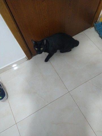 Doa-se gatinho  - Foto 4