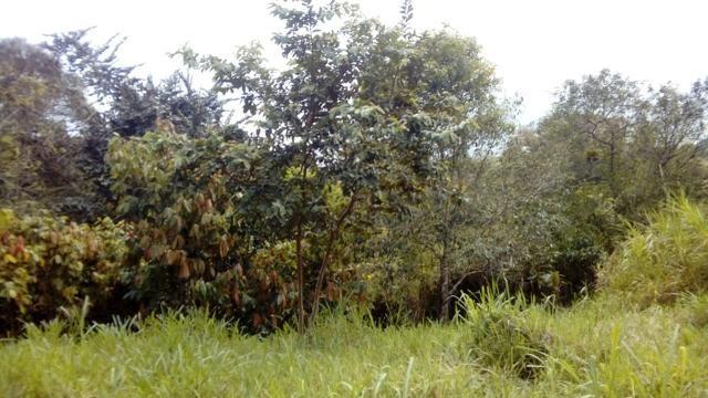 Terreno Rodovia Itabuna- Ilhéus - Foto 6