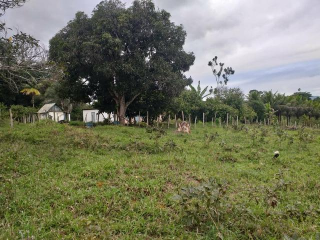 Vendo sitio em Apuarema ba - Foto 6