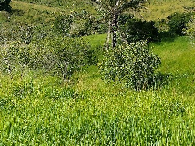 9 hectares nas Margens da BR 232 a 25 km de Recife PE - Foto 18