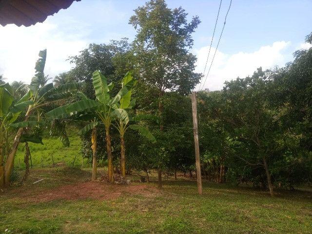 Vende-se sítio com casa, amplo espaço e inúmeras árvores frutíferas. - Foto 8