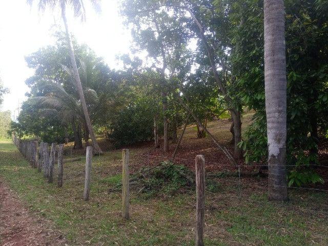 Vende-se sítio com casa, amplo espaço e inúmeras árvores frutíferas. - Foto 9
