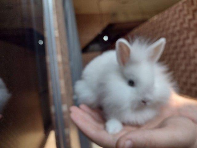 Mini coelhos fofinhos - Foto 5