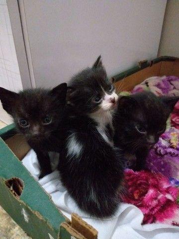 Gatinhos e gatinhas  - Foto 2