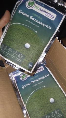 1 Kg de sementes de grama importada bermudagrass cynodon doctylon (biosementes)