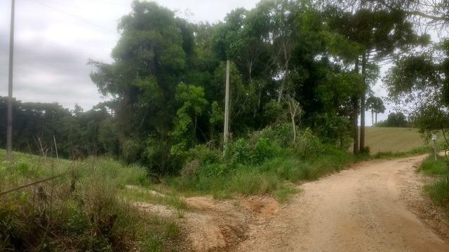 Ref. 2049 - Excelente chácara 7,5 alqueires localizada no Guajuvira - Foto 3