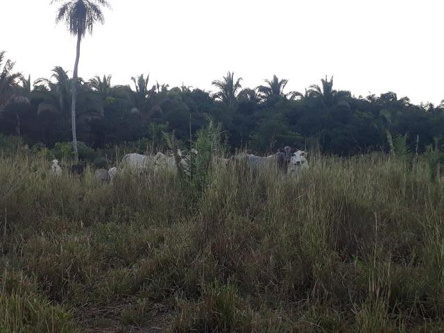 Chácara de terra boa a 9 km de Acorizal - Foto 2