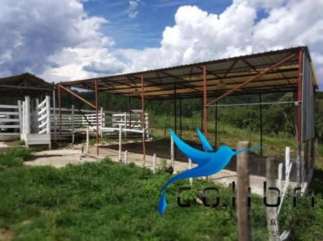 Chácara pronta para criação de gado em mandirituba - Foto 7