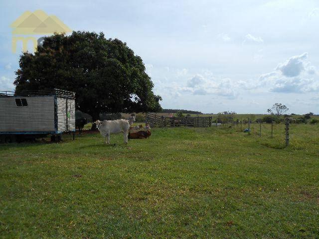 Sítio com 1 dormitório à venda, 96800 m² por R$ 590.000,00 - Zona Rural - Martinópolis/SP - Foto 19