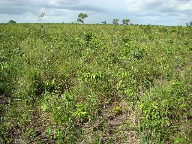 Fazenda com 1.006 hectares, com sede, aberta, para soja e milho - Foto 15