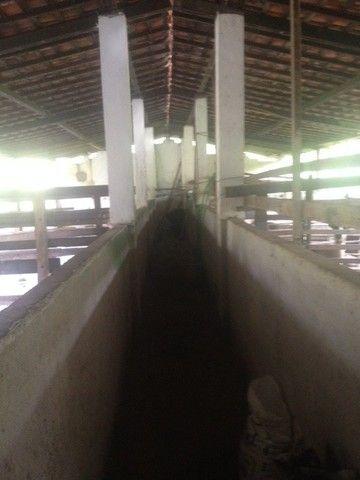 Fazenda-Granja-Sítio 5,5 Hectares c/Riacho Perene na Guabiraba, Aceito Automóvel - Foto 13