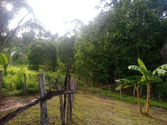 Vende-se sítio com casa, amplo espaço e inúmeras árvores frutíferas. - Foto 4