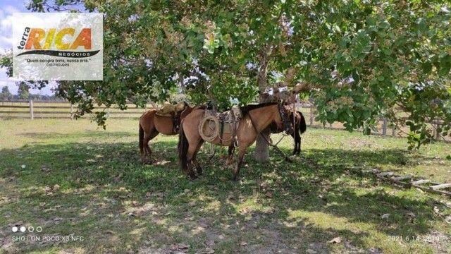 Fazenda a venda, com 129 hectares, no distrito de Triunfo/RO - Foto 12