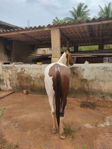 Potro Paint Horse - Foto 5