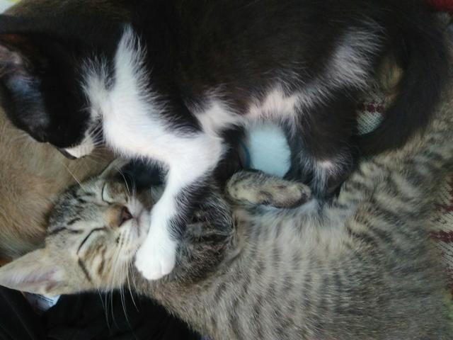 Gato rajadinho pra adoção