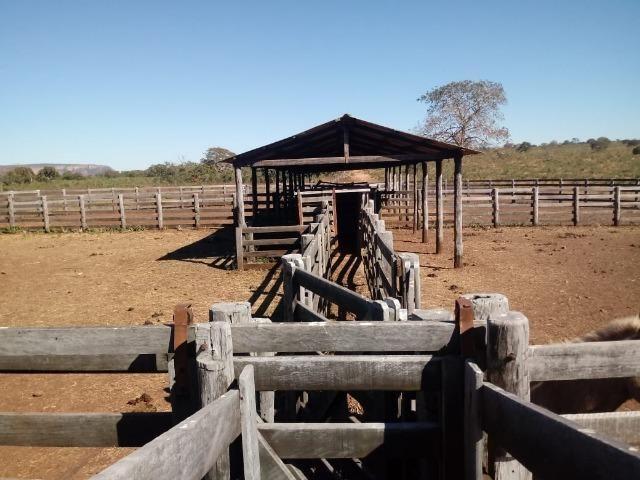 Fazenda com 1.940 hectares na estrada do manso ha 45 km de Cuiabá - Foto 5