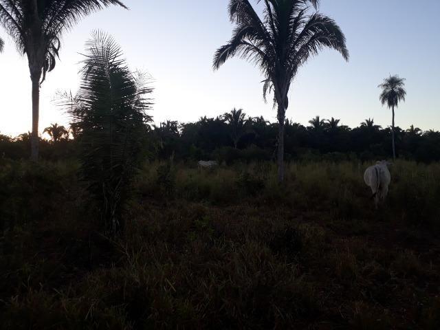 Chácara de terra boa a 9 km de Acorizal - Foto 8