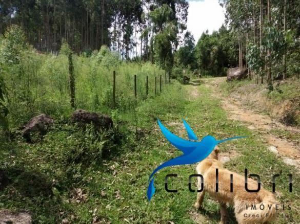 Chácara pronta para criação de gado em mandirituba - Foto 17