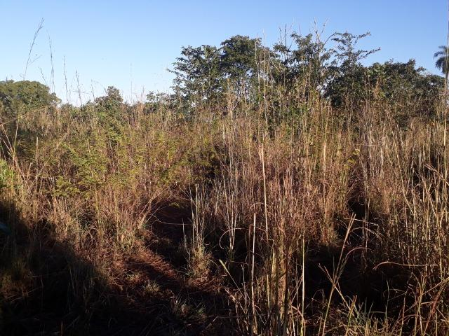 Chácara de terra boa a 9 km de Acorizal - Foto 20
