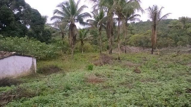 Vendo fazenda em Araçás ba - Foto 10
