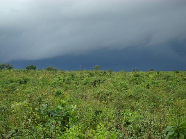 Fazenda com 1.006 hectares, com sede, aberta, para soja e milho - Foto 13