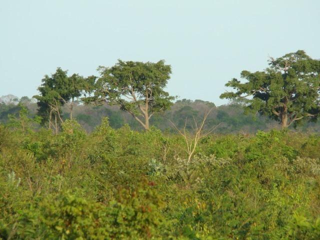 Fazenda com 1.006 hectares, com sede, aberta, para soja e milho - Foto 6