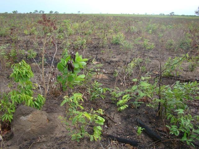 Fazenda com 1.006 hectares, com sede, aberta, para soja e milho - Foto 9