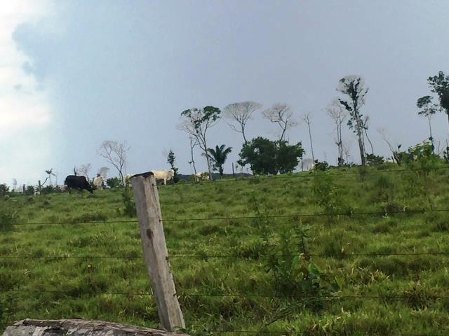 Fazenda 2.904 ha Nova Monte Verde MT - Foto 17