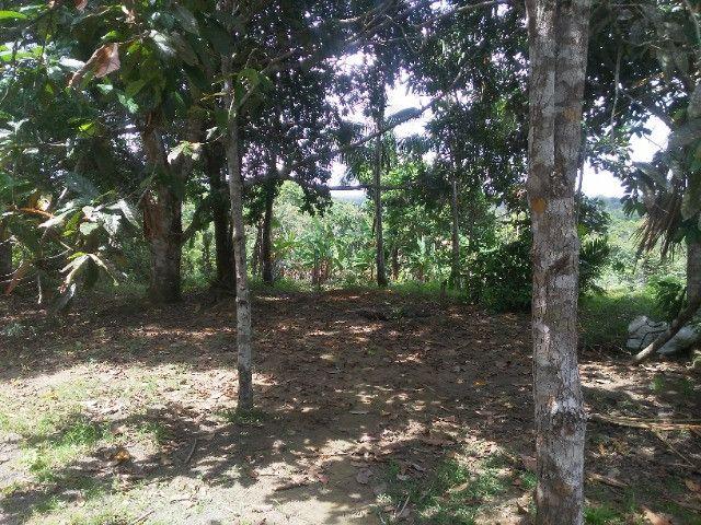 Vendo ou troco por casa em Manaus um sitio na AM010 KM 127. Mais 10KM ramal - Foto 15