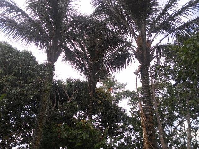 Vendo ou troco por casa em Manaus um sitio na AM010 KM 127. Mais 10KM ramal - Foto 10
