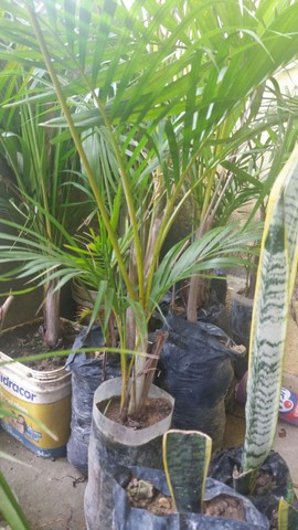 Plantas variadas a negociar - Foto 3