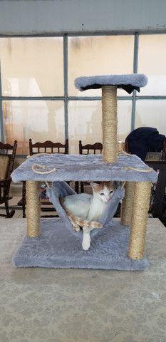 Arranhador para gatos com rede - Foto 2