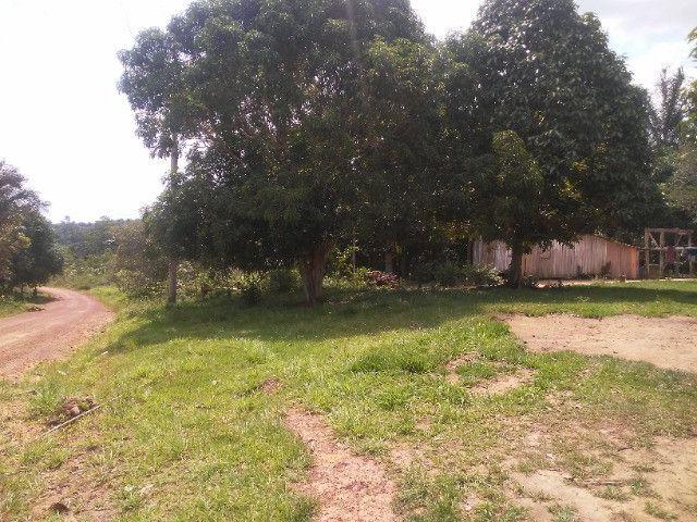 Vendo ou troco por casa em Manaus um sitio na AM010 KM 127. Mais 10KM ramal - Foto 9