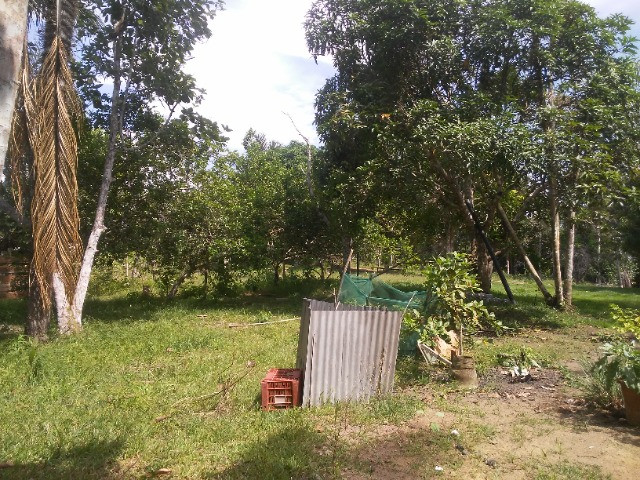 Vendo ou troco por casa em Manaus um sitio na AM010 KM 127. Mais 10KM ramal - Foto 19