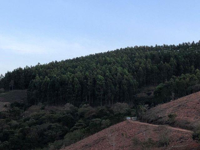 Eucalipto 10mil pés 8 anos de idade - Foto 5